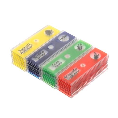 48pcs / set Пластиковые подготовленные микроскопы Слайды животных Насекомые Растения Образцы образцов Слайды с цветными ярлыками для учеников детей