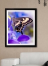 Pittura Di Diamante Di Lusso Di Farfalla Lucida E Originale