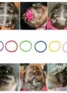 12 bolsos / 1200Pcs elástico pelo bandas anillos cuerdas desechables caucho banda caramelo color del pelo accesorio rabo de cola titular