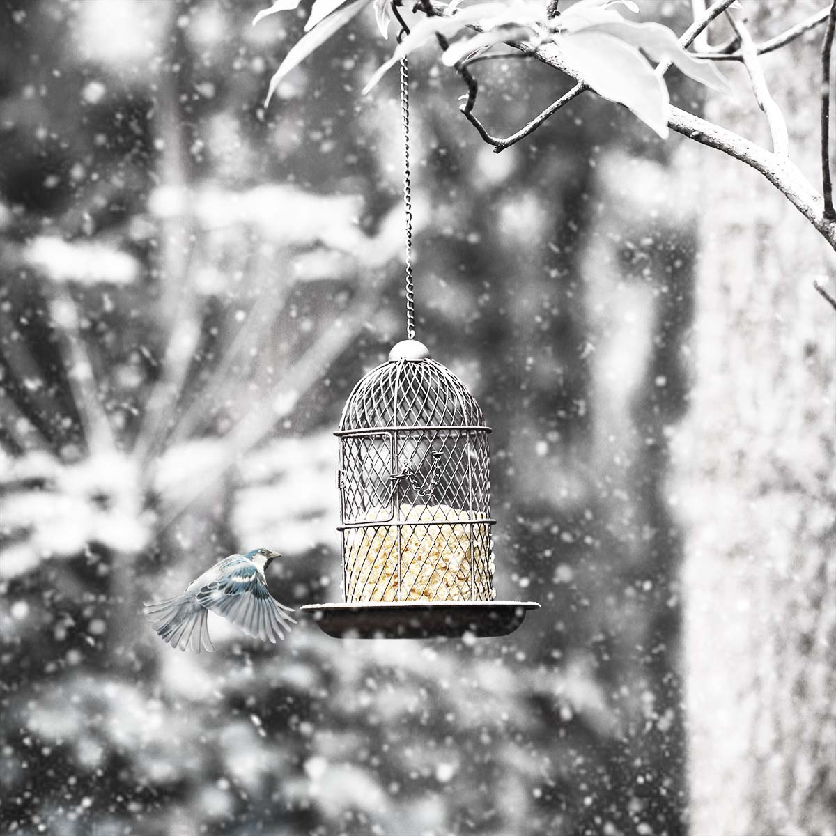 Best and cheap brown Tooarts Bird Feeder Bird Cage Feeder Hanging ...