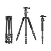 Kingjoy G22C+G00 Portable Travel Carbon Fiber Camera Tripod Monopod