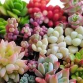 400ピース混合多肉種子リトープ珍しい生きている石植物サボテンホーム植物