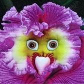 珍しい赤ちゃんの顔の蘭多年生の花の種プロフェッショナルパック100ピース