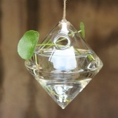Florero de planta hidropónica de escritorio de vidrio transparente