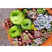 200pcs Assorted Rare Succulents Plants Seeds