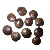 20 pcs Wisteria Vigne Arbre Graines Pourpre Floribunda Semente Plante Mixte Wisteria sinensis Incroyable Grimpeur Fleur Graine Pour La Maison DIY