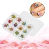 3D real decoraciones de flores secas para UV Gel 12 rejillas Nail Art Tips manicura pegatinas de uñas