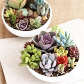 200pcs Assorties Rare Succulentes Plantes Graines