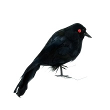 Realistic Looking Birds Black Feathered Crows