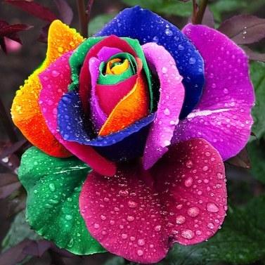 庭の装飾かわいい植物多色のローズシードオールシーズンガーデンバルコニーの花