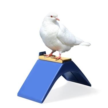 Pigeon Rest Stand