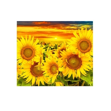 DIY 5D Diamond Painting Kit Sunflower Pattern Picture for Adults & Children Full Drill Arts Craft with Tools( Sunflower)
