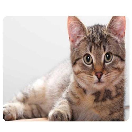 Other Alfombrilla de ratón CAT-5 Cute