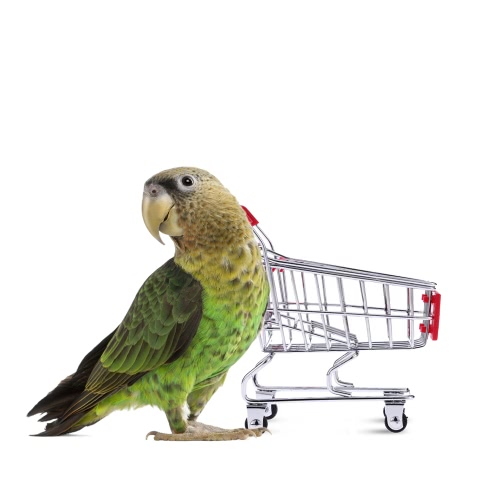 Anself Cute Metal Mini Shopping Cart Pet Bird Parrot Toy for Conures Parakeet Lovebirds Cockatiel