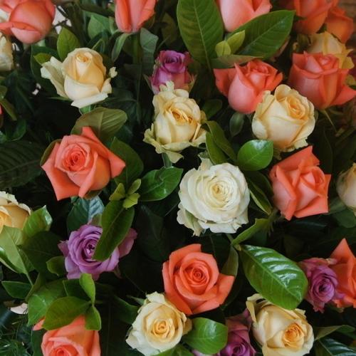 200 шт / пакет Бонсай Цветочный семенной голландский Радуга Роза Семена Саженец Флор Завод для дома DIY Садоводство Посадка цветов