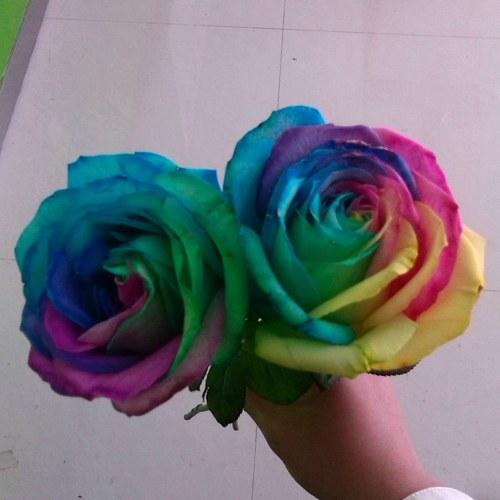 Yarda Decoración Linda Planta Multicolor Semillas