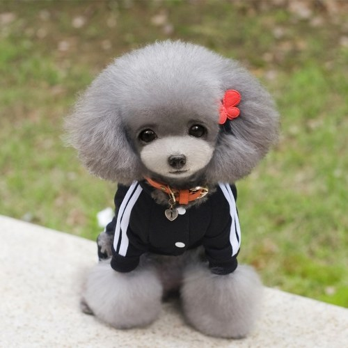 Vêtements d'hiver chaud pour chien