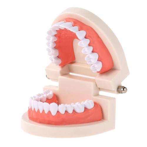 Dental Kind Zähne Lehre Modell Adult Teeth Gums Standard Demonstration Tool für Kinder Studieren