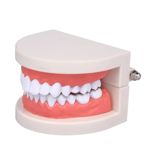 Estándar Diente de Enseñanza Gigante Dental Dentista Modelo de dientes Niño Kidtraining Modelo Enfermedad Dientes Modelo Educativo Médico