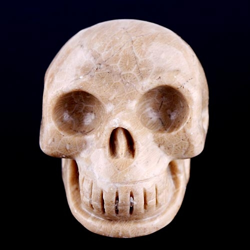 Stock Taking: Unique Coral Fossil Gemstone/Stone Carved Skull CRS015