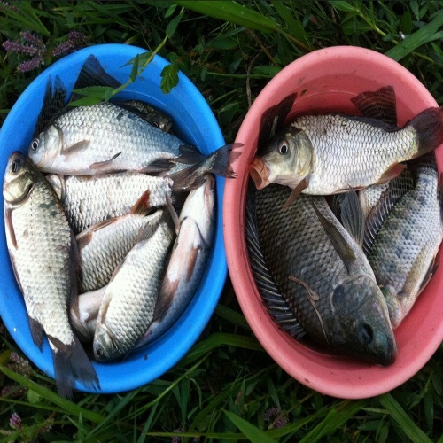 Lixada Notte luminosa Popper galleggianti esca pesce gatto Snakehead Bass Fishing esca esca artificiale rigido con due ganci triangolo
